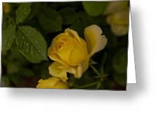 Yellow N Leaf Greeting Card