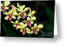 Yellow Orchid Cascade Greeting Card