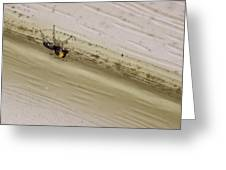 Yellow Palp Spider 1 Greeting Card