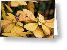Yellow Petal Leaf With Sprig Greeting Card