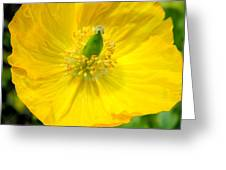 Yellow Poppy In Bloom Greeting Card