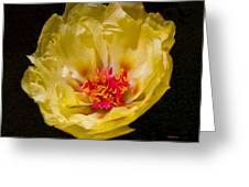 Yellow Portulaca Greeting Card by Mitch Shindelbower
