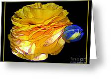 Yellow Ranunculus Flower With Blue Colored Edges Effect Greeting Card