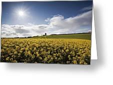 Yellow Rapeseed Field, Newgrange Greeting Card