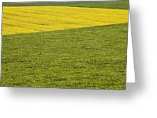 Yellow Rapeseed Growing Amongst Green Greeting Card
