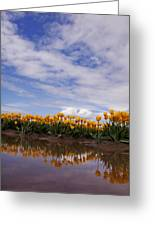 Yellow Reflections Of Tulips Greeting Card