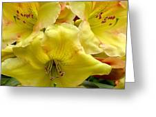 Yellow Rhododendron Trio Greeting Card