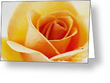 Yellow Rose After The Rain Greeting Card