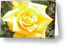 Yellow Rose At High Noon Greeting Card by Alys Caviness-Gober