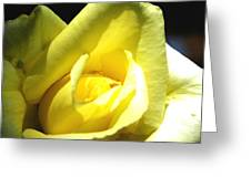 Yellow Rose For Love Greeting Card