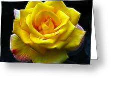 Yellow Rose In The Moonlight Greeting Card