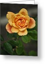 Yellow Rose Of Baden Greeting Card
