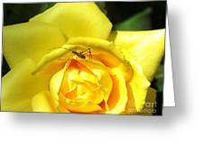 Yellow Rose Visitor Greeting Card