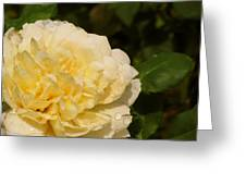 Yellow Rose Water Drops Greeting Card