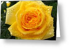 Yellow Rose With Water Droplets Greeting Card