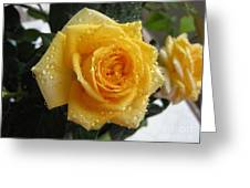 Yellow Roses With Water Droplets Greeting Card
