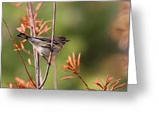 Yellow-rumped Warbler - Peaceful Pastels Greeting Card