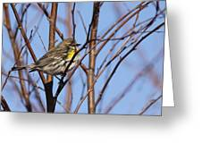 Yellow-rumped Warbler - Placid Greeting Card
