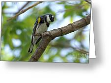 Yellow Rumped Warbler Looking Down Greeting Card