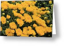 Yellow Sea Of Flowers Greeting Card