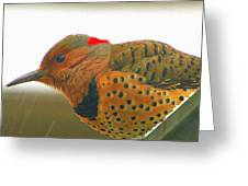 Yellow Shafted Flicker Greeting Card