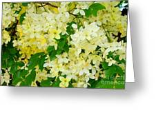 Yellow Shower Tree - 1 Greeting Card