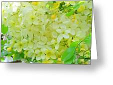 Yellow Shower Tree - 5 Greeting Card