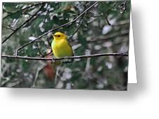 Yellow Songbird Greeting Card