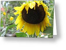 Yellow Splendor Greeting Card