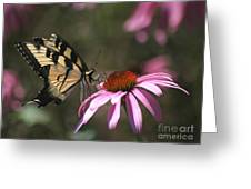 Yellow Swallowtail And Purple Coneflower Greeting Card