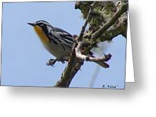 Yellow-throated Warbler Greeting Card