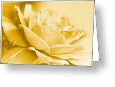 Yellow Tone Rose  Greeting Card