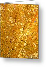 Yellow Tree Leaves Greeting Card