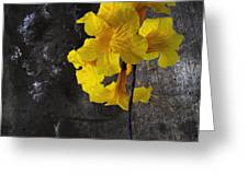 Yellow Trumpet Greeting Card