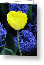 Yellow Tulip And Hyacinth Greeting Card