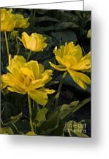 Yellow Tulips  Tulipes Jaune Greeting Card