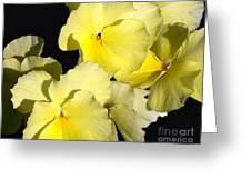 Yellow Violas Greeting Card