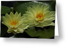 Yellow Water Lilies Greeting Card