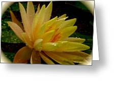 Yellow Waterlily Macro Greeting Card