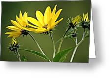 Yellow Wildflower 2 Greeting Card