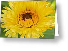 Yellow Zinnia 9494 4286 Greeting Card