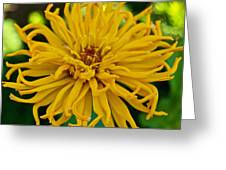 Yellow Zinnia_9480_4272 Greeting Card