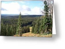 Yellowstone High Elevation Forest Greeting Card
