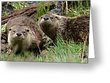Yellowstone River Otters Greeting Card