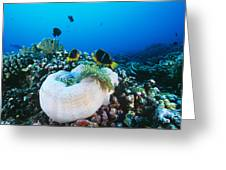 Yellowtail Anemonefish By Their Anemone Greeting Card