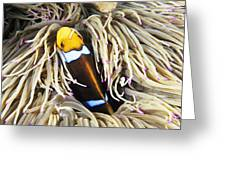 Yellowtail Anemonefish In Its Anemone Greeting Card
