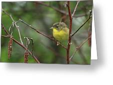 Yellowthroated Warbler Greeting Card