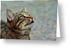Yes I Am A Pretty Kitty Greeting Card