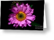 Yoho - Subalpine Fleabane Wildflower  Greeting Card