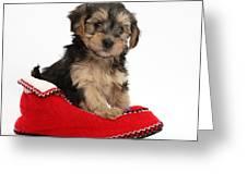 Yorkipoo Pup Greeting Card
